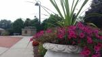 Mary Garden 1